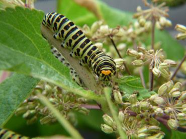 larver i sverige